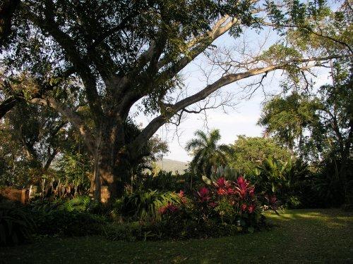 Tropical paradise for a dream retreat